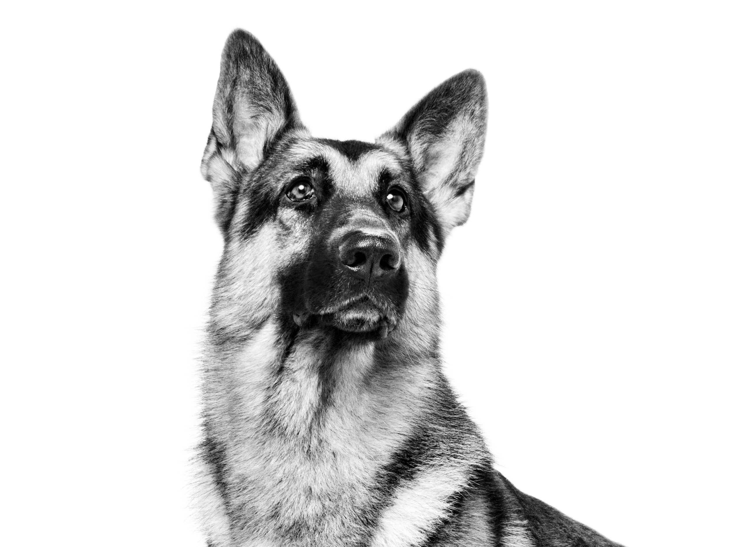 German Shepherd Planet